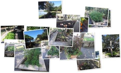 Hillstone-Winter-Park-Herb-Garden.jpg